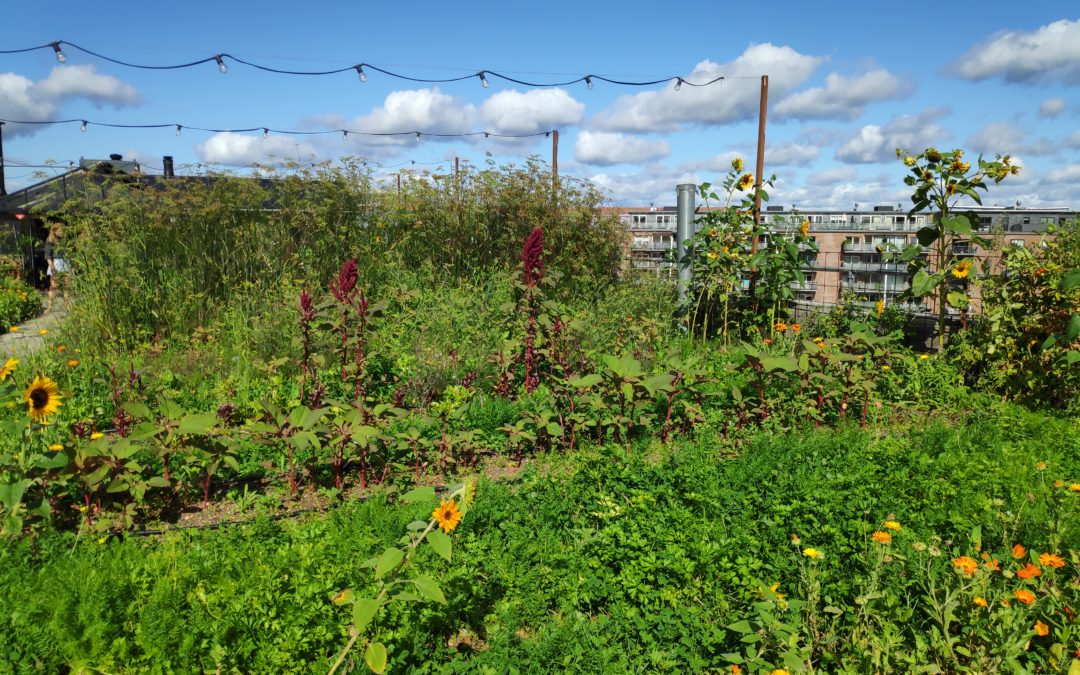 How to turn your garden into a carbon sink!