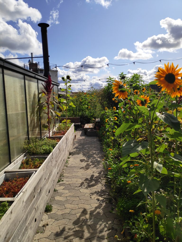 turn your garden into a carbon sink