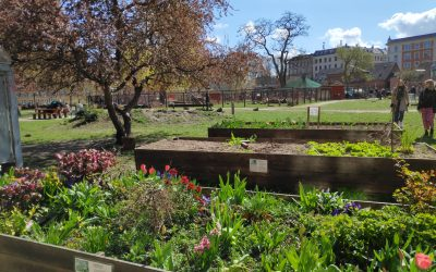 #Whatson – Copenhagen's best gardens and parks