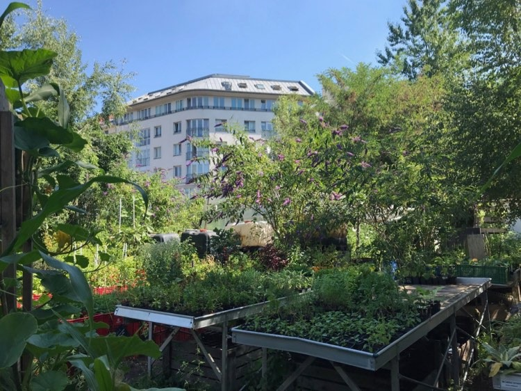 Harvest time in the city – Berlins Urban Gardens