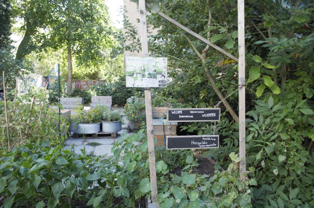 Urban gardens in Berlin